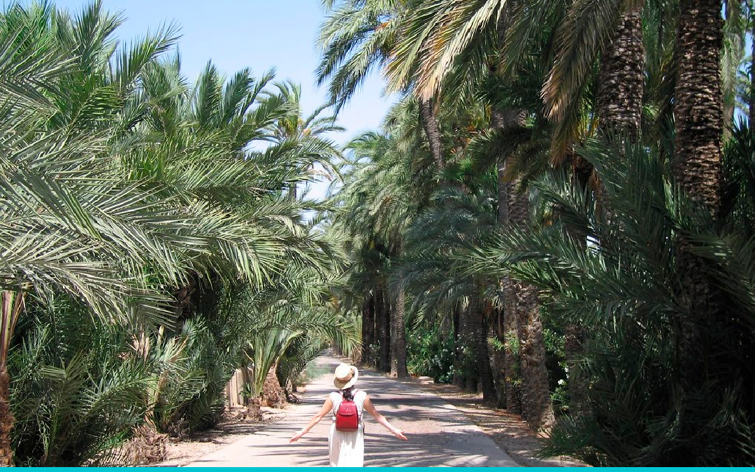 The Palm Grove of Elche: A UNESCO World Heritage Site
